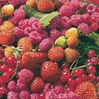Servetten Delicious berries