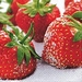 Servetten Aardbeien