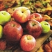 Servetten Colourful Apples